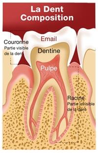 composition dentaire